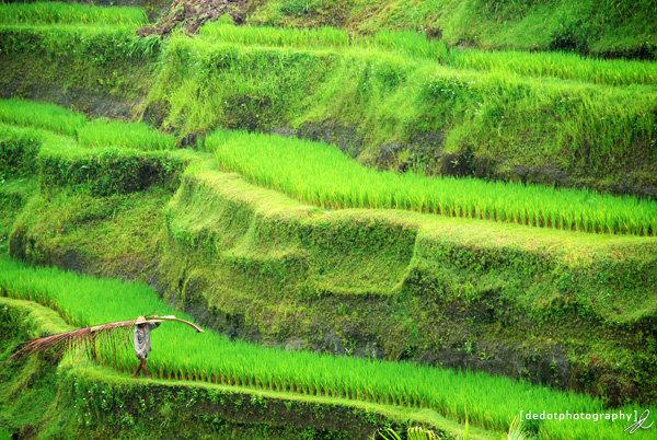 Petani Subak,Bali
