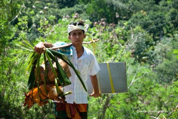 upacara adat bali di desa gumang